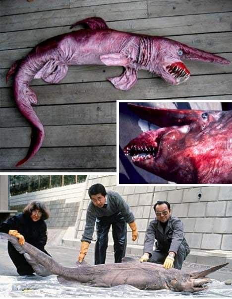Все что осталось от акулы длиной 18 метров.