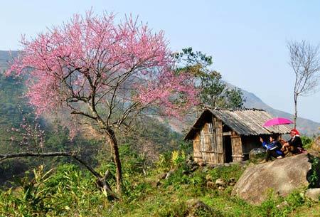 4 mùa Lào Cai đẹp sững sờ - 1