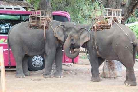 Ép voi đẻ: Chuyện không dễ - 1