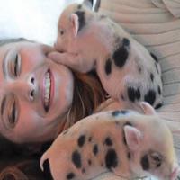 Cô gái ăn, ở với 40 con lợn
