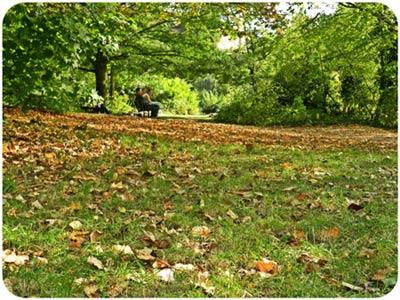 Nhớ vẻ đẹp mùa thu trong công viên xứ sương mù - 1