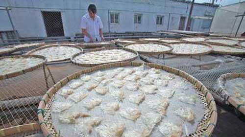 TQ: 30% vây cá mập chứa thủy ngân quá liều - 1