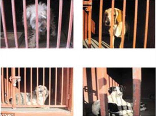 Mexico: 5 người chết vì chó hoang tấn công - 1
