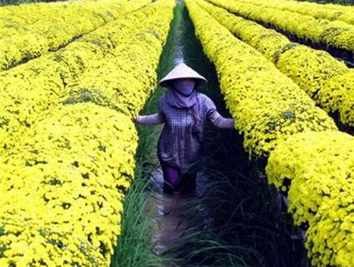 Công dụng chữa bệnh của các loài hoa (P1) - 1