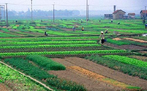 Sửa Luật Đất đai: Bớt ưu tiên Nhà nước - 1