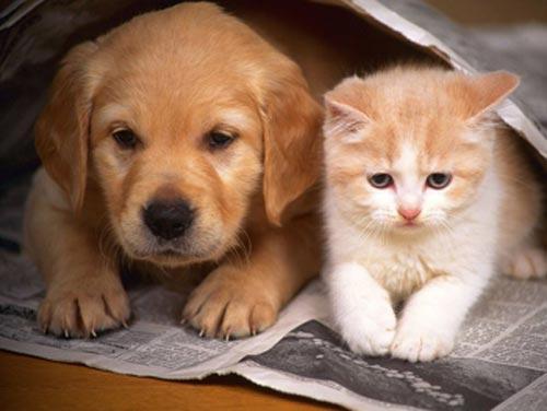 Ký sinh trùng vào cơ thể vì ... cưng chó mèo - 1