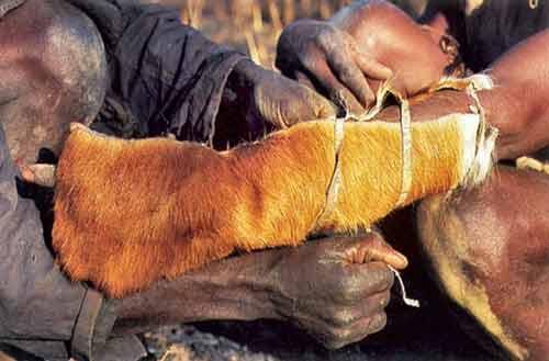 Tay không săn trăn khổng lồ ở Cameroon - 1