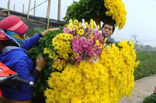 Bán hoa sang Trung Quốc: Tiềm ẩn rủi ro - 1