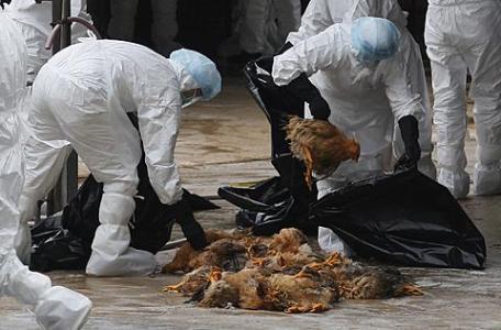Bộ Y tế tăng cường phòng cúm A/H5N1 - 1