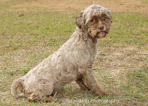 Mỹ: Xôn xao ảnh chó giống người - 1