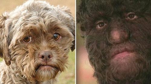 Chú chó có gương mặt giống người - 1