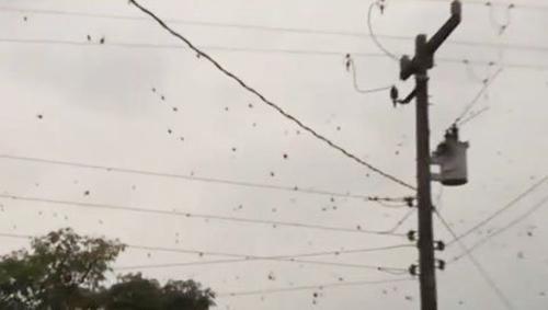 """Mưa"" nhện ở Brazil - 1"