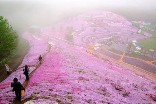 Thảm hoa tráng lệ ở Nhật - 1