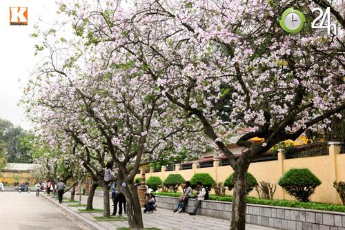 Tháng ba xao xuyến sắc hoa ban - 1
