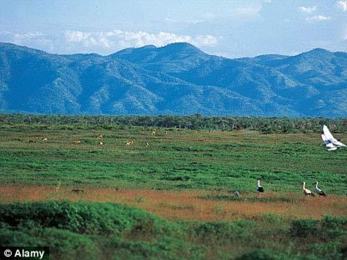 Zimbabwe: Cô gái bị sư tử vồ vì hẹn hò ở rừng - 1