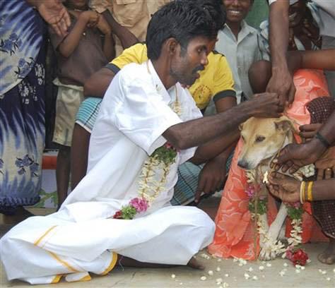 Kết hôn với chó, rắn: Chuyện chỉ ở Ấn Độ - 1