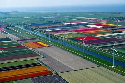 Mê hồn những cánh đồng hoa Hà Lan từ trên cao - 1