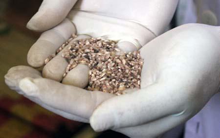 """Cấp gạo ăn 6 tháng cho dân vùng """"bệnh lạ"""" - 1"""