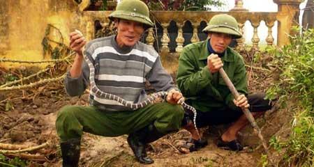 Ly kỳ người 40 năm lên rừng bắt rắn - 1