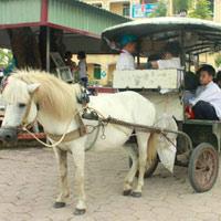 Xe ngựa, xe tự chế ngang nhiên đưa trẻ đến trường