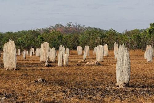Nghĩa địa mối khổng lồ ở Australia - 1