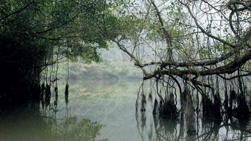 Bí ẩn cây si nghìn tuổi ở Tràng An - 1