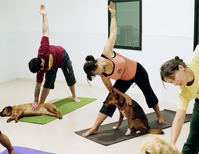 Yoga dành cho chủ nhân và những con thú cưng của họ