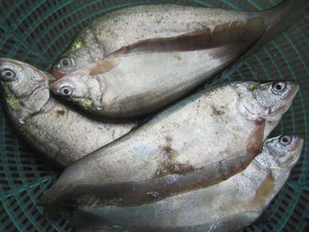 """Thưởng thức món cá """"của quý phi"""" - 1"""