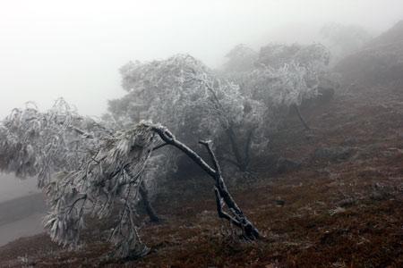 Hàng nghìn lượt khách đến Mẫu Sơn xem băng tuyết - 1