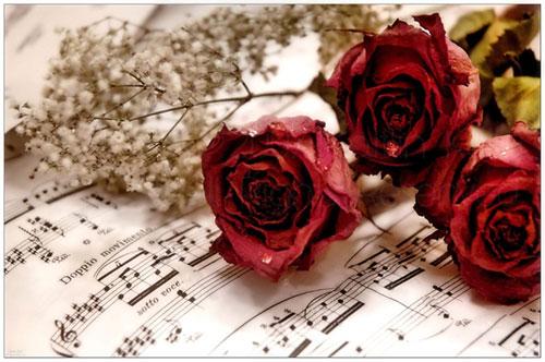 Nước mắt mặn chát ngày Valentine - 1