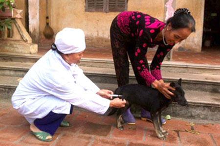 Một tháng, 10 người thương vong vì chó dại cắn - 1