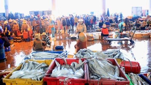 Cuộc chiến nguyên liệu thủy sản ở Đà Nẵng - 1