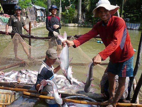Xuất khẩu cá tra: Tìm hướng đi mới - 1