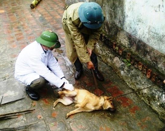 Thanh Hóa: Thêm 1 người tử vong vì chó dại cắn - 1