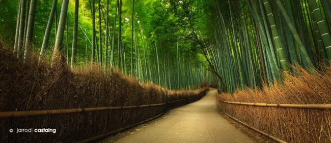 Khi đến Nhật Bản bạn có thể dễ dàng tìm thấy cây tre ở bất cứ đâu từ những khu rừng và cho đến những nơi tản bộ.