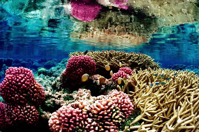 1. Rạn san hô Great Barrier ở Queensland (Úc). Đây được biết là rạn san hô lớn, đa dạng và ngoạn mục nhất giới. Với hệ sinh vật biển vô cùng phong phú bao gồm: san hô, sao biển, cá đuối, và mập và vô vàn những loài cá khác.