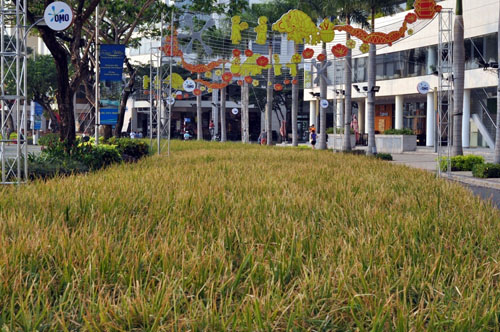 Độc đáo: Tái hiện cảnh thôn quê giữa Sài Gòn - 1