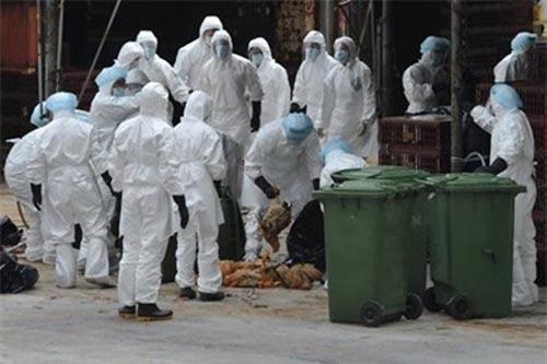 Xuất hiện người nhiễm cúm A/H9N2 đầu tiên - 1