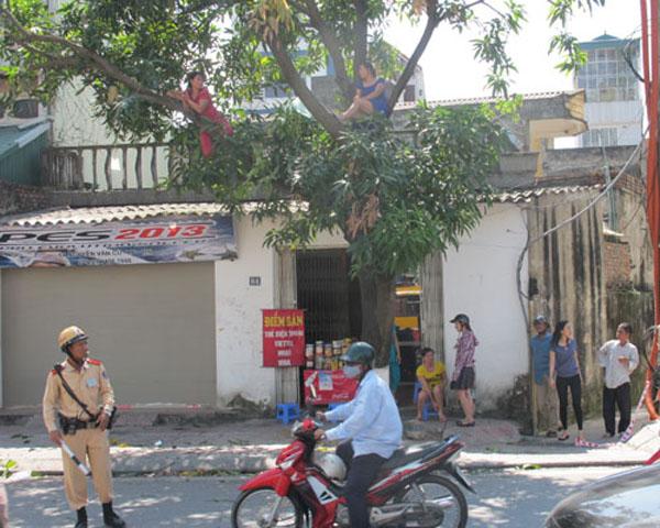 """HN: Gặp người phụ nữ từng """"cố thủ"""" trên cây phản đối chặt hạ - 1"""