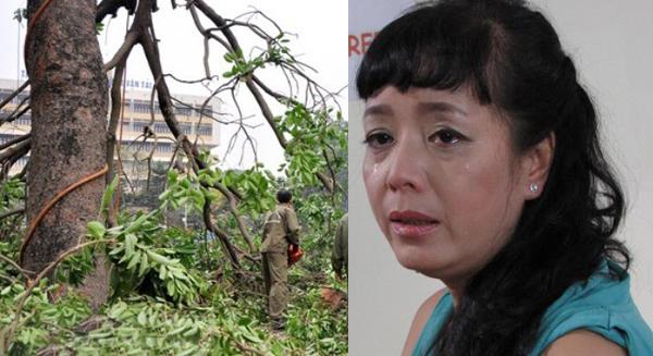"""NSƯT Chiều Xuân: Tôi gào khóc như """"mụ điên"""" bảo vệ cây - 1"""