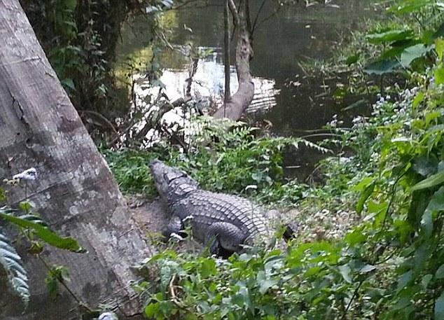 """Đến gần cá sấu khổng lồ chụp """"tự sướng"""" và kết cục - 1"""