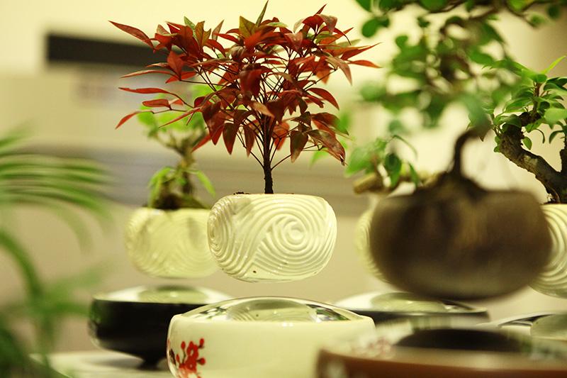 Săn bonsai bay, xoay tròn trên không trung chơi Tết - 1