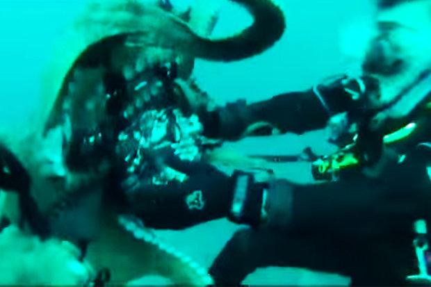 Video: Bạch tuộc khổng lồ dùng xúc tu đấu vật với thợ lặn - 1