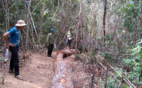 20 lâm tặc dùng súng cướp lại gỗ lậu - 1