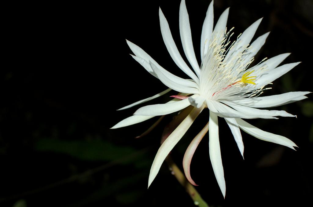 Choáng với 8 loài hoa đắt đỏ nhất hành tinh - 1