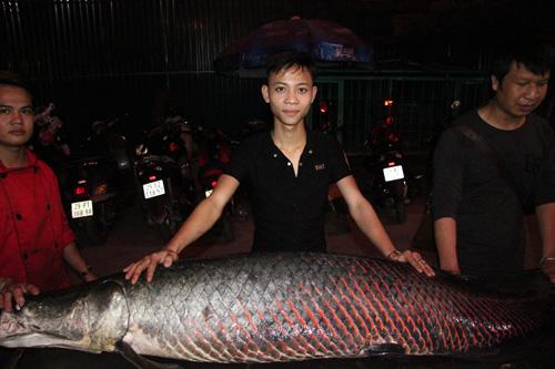 Cá hải tượng dài gần 2m xuất hiện ở Hà Nội - 1