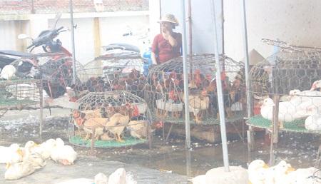 Cúm A/H7N9 cận kề, chuyên gia khuyên không ăn thịt gà mổ sẵn ở chợ - 1