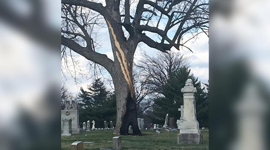 Kì lạ gốc cây cháy ruột không cháy vỏ trong nghĩa trang Mỹ - 1