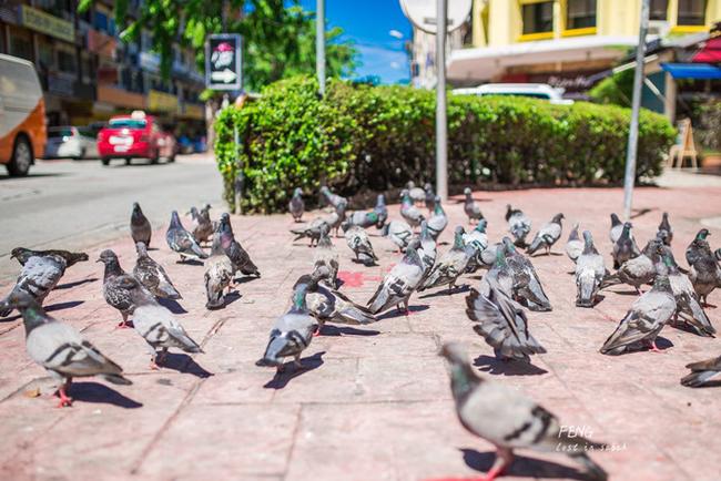 Con phố Gaya, thành phố Kota Kinabalu, đa phần quán ăn và khách sạn do người Hoa mở ra
