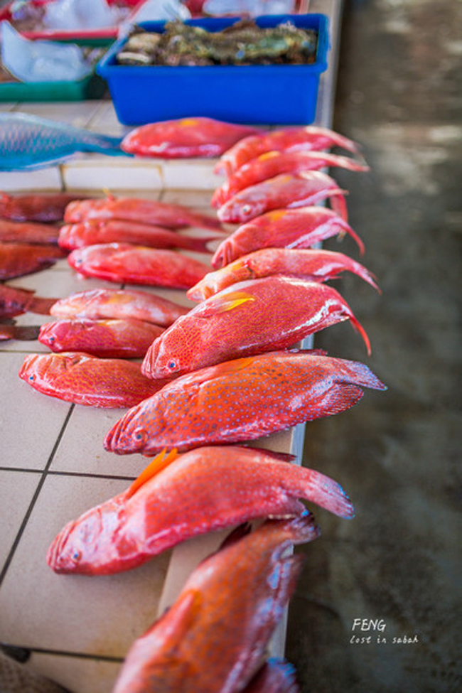 Hãy đến, để thưởng thức những loài cá bạn chưa biết